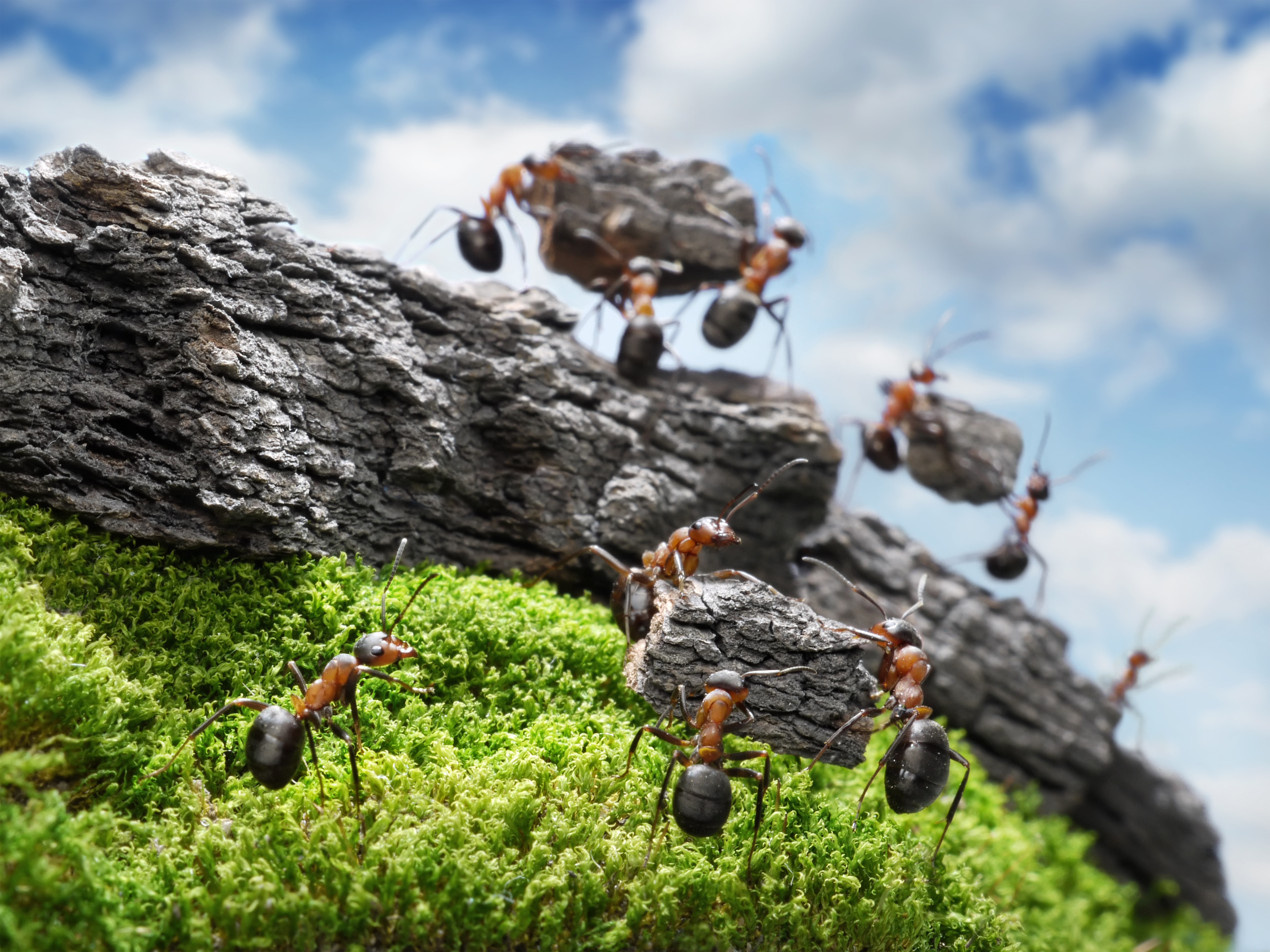 Working ants - photo#19