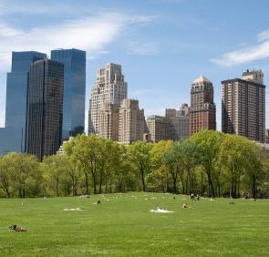Trees Reflect Urban Wealth