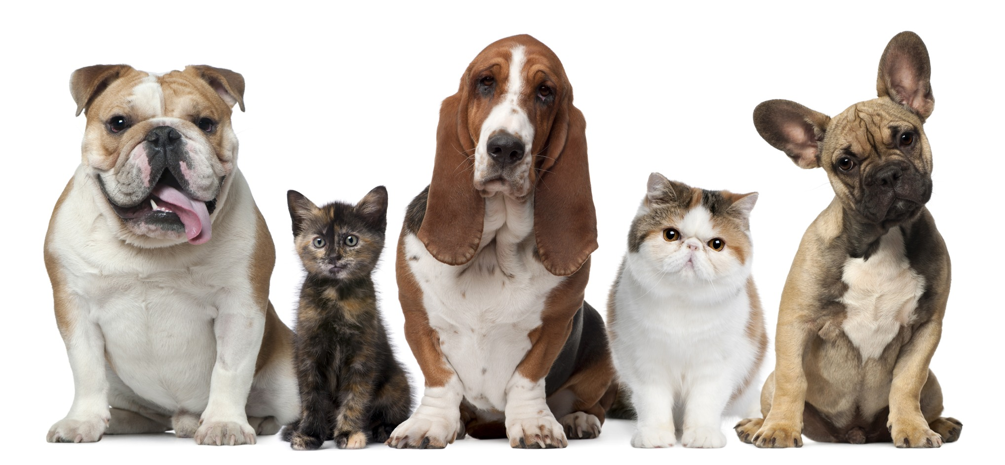 Weekly Economic News Roundup and puppy pandemic demand
