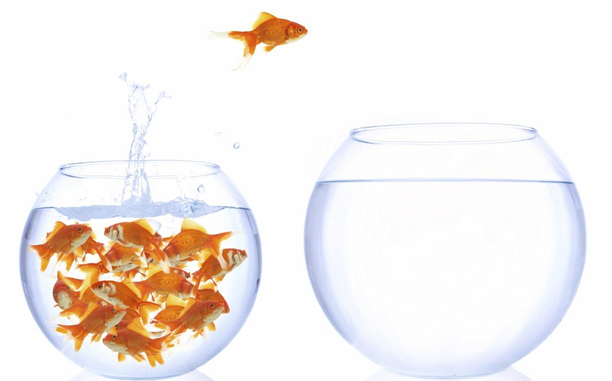 State migration goldfish