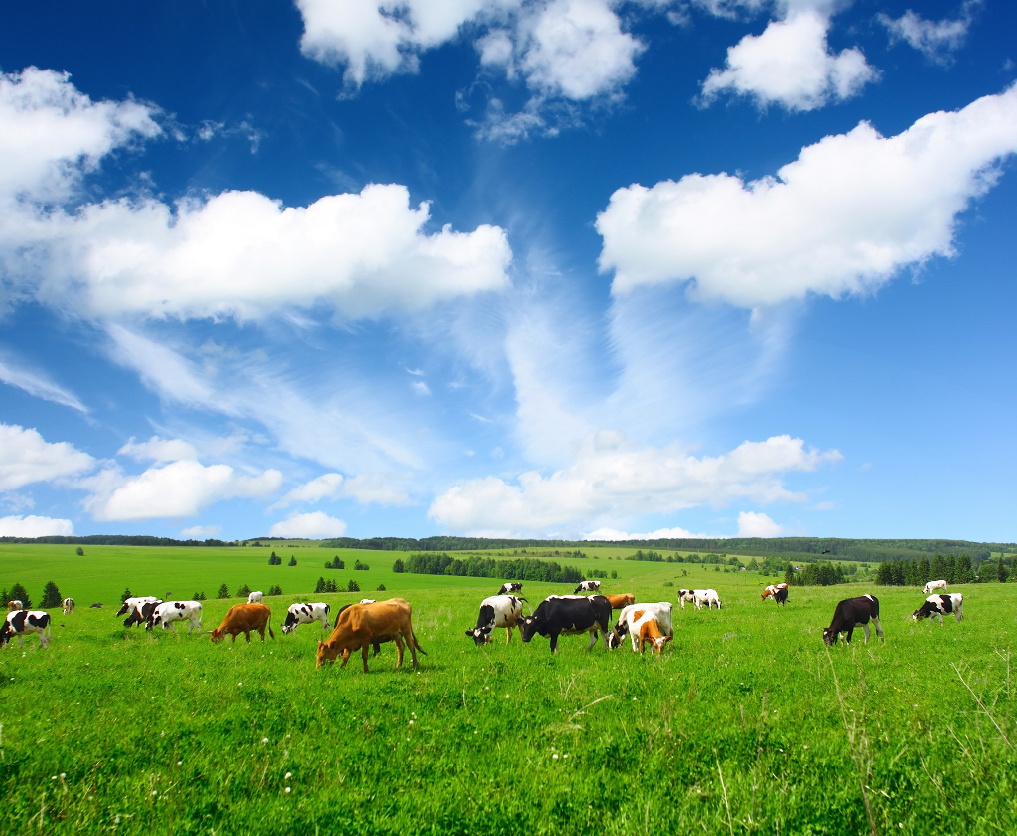 Opportunity cost of less meat: Cows grazing in a mountain pasture