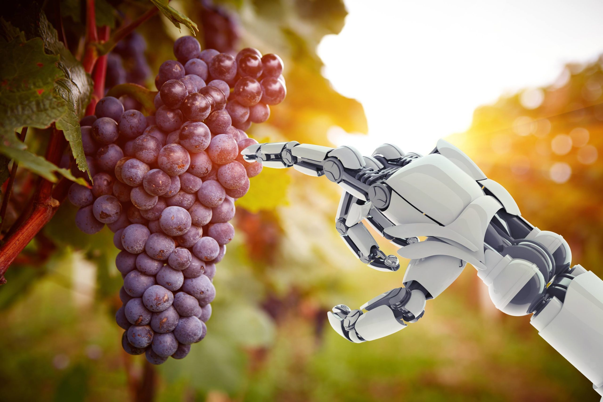 everyday economics and robots picking grapes