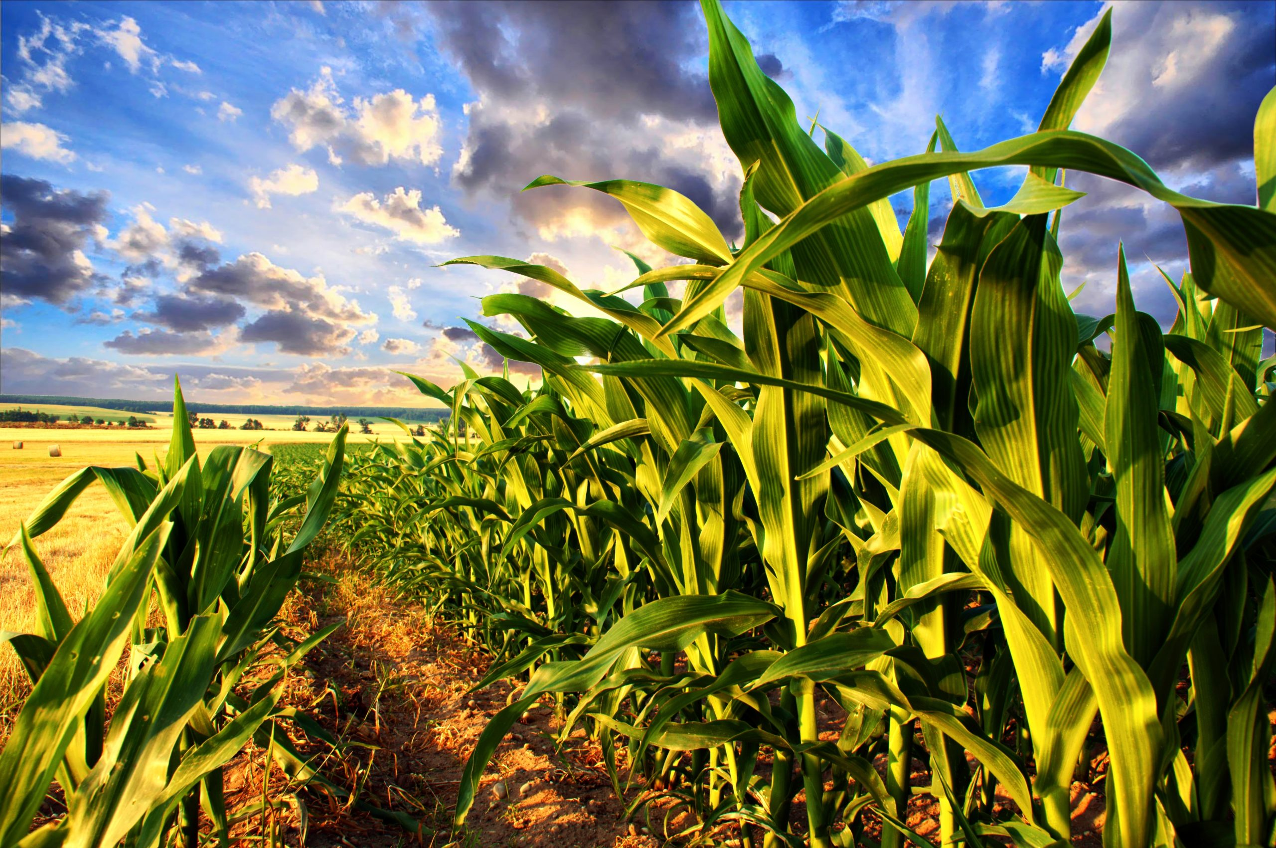 Weekly Economic News Roundup and corn and climate