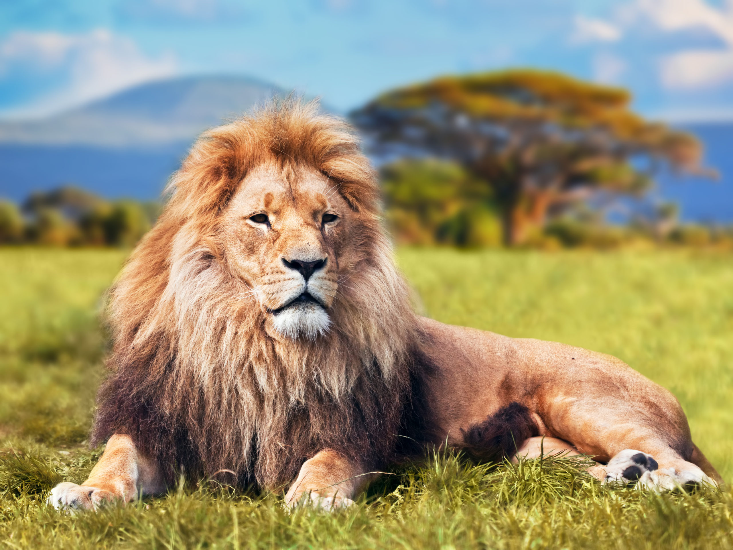 Everyday economics and Why We Need Trophy Hunting