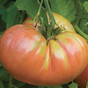 Weekly Econoic New Roundup and tomato tariffs