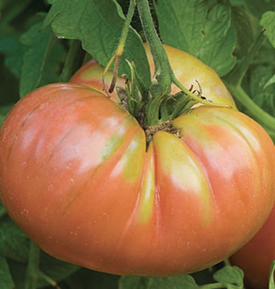 Our Weekly Economic News Roundup and tomato tradeoffs