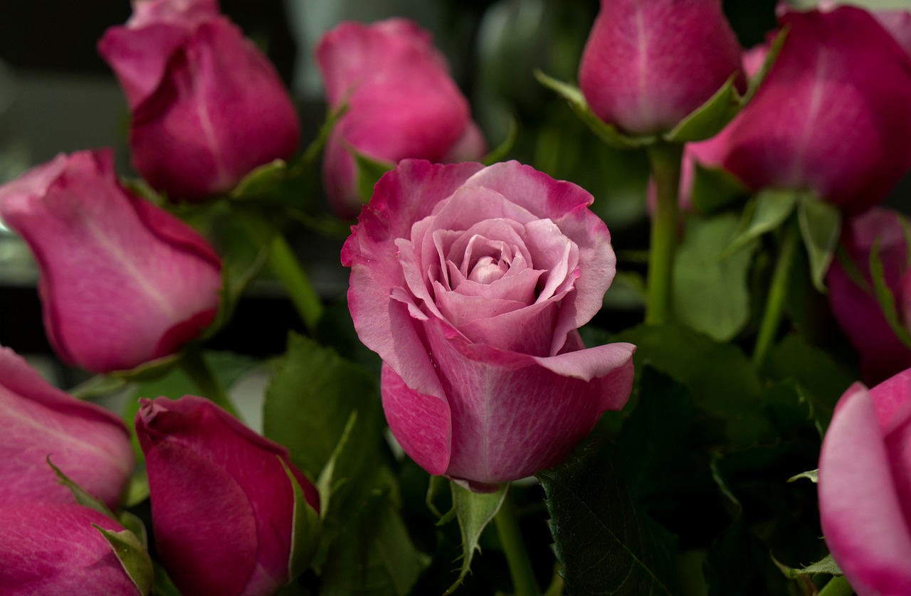 Weekly Economic News Roundup and Columbia's Valentine's roses
