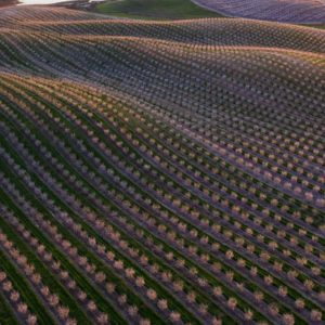 Weekly economic news roundup and almond growers