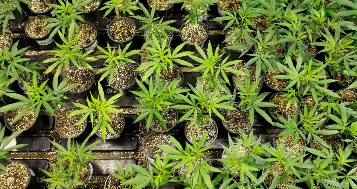 Weekly Economic News Roundup and marijuana economics