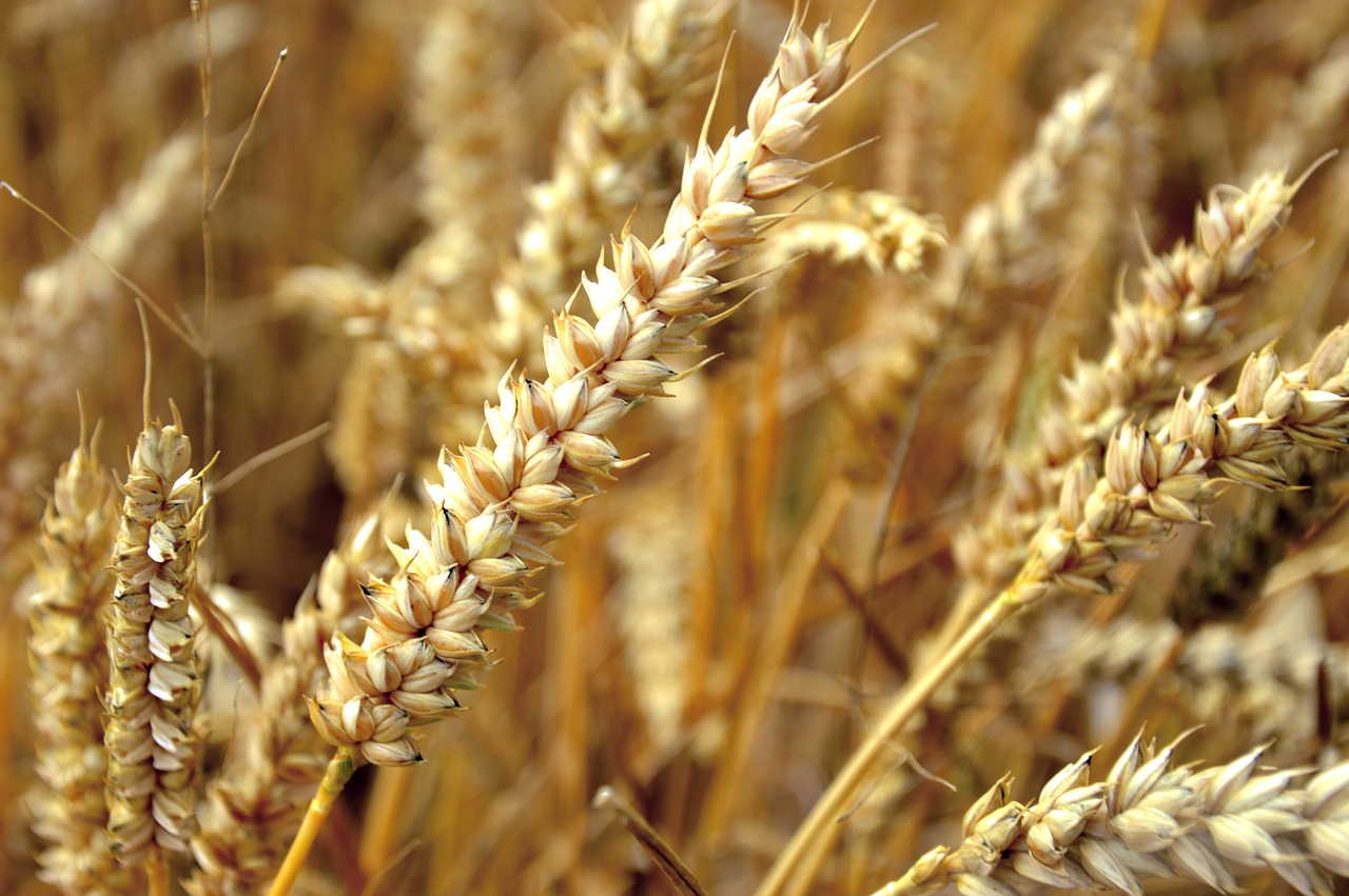 Weekly Economic News Roundup and Russian wheat farmers