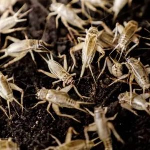 Weekly Economic News Roundup and eating crickets