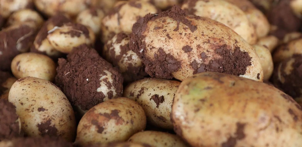 Weekly Economic News Roundup and potato seed rights
