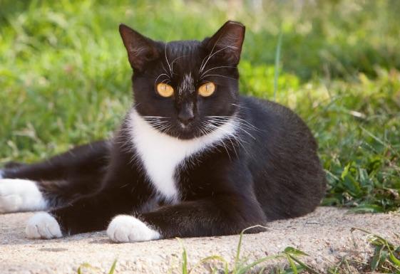 Weekly economic news roundup cat census