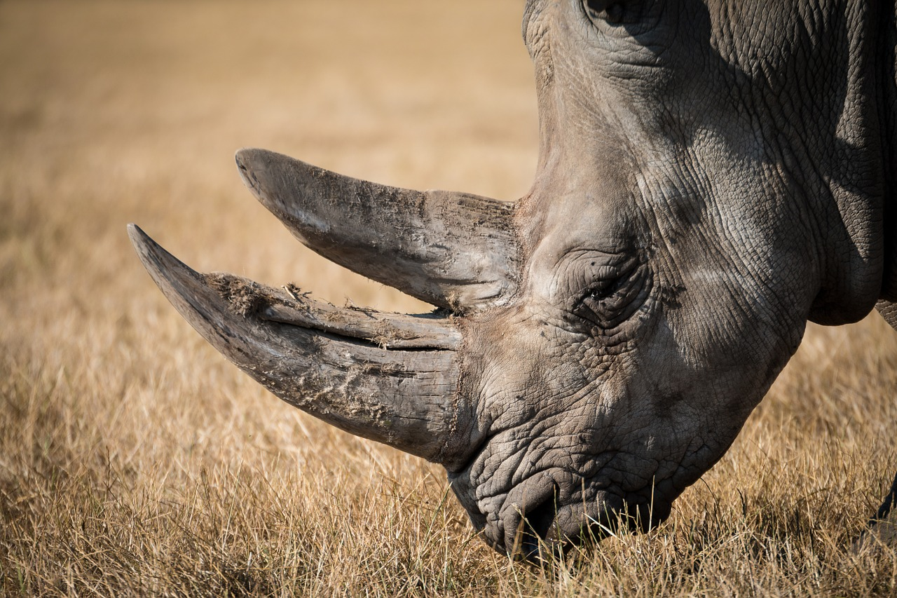 Weekly Economic News Roundup and rhino conservation