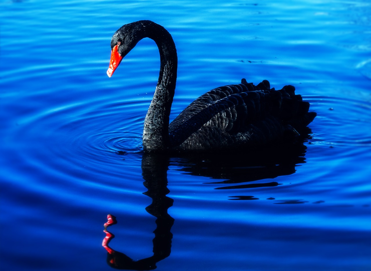 Weekly Economic News Roundup and Black Swan Event