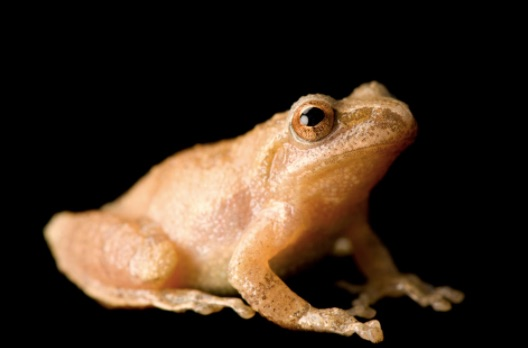 Weekly Economic News Roundup and lockdown tradeoffs spring peepers