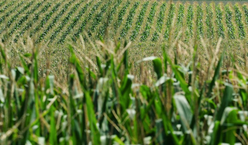 Economic News Roundup and canned corn shortages