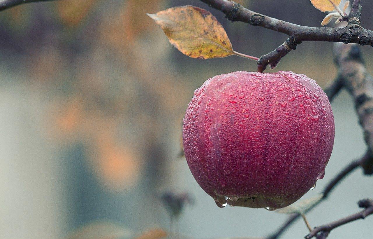 Weekly Economic News Roundup and apple development