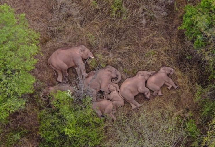 Weekly Economic News Roundup and human-elephant conflict