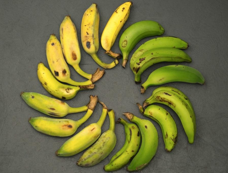 banana's travels