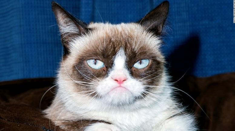 Grumpy Cat price