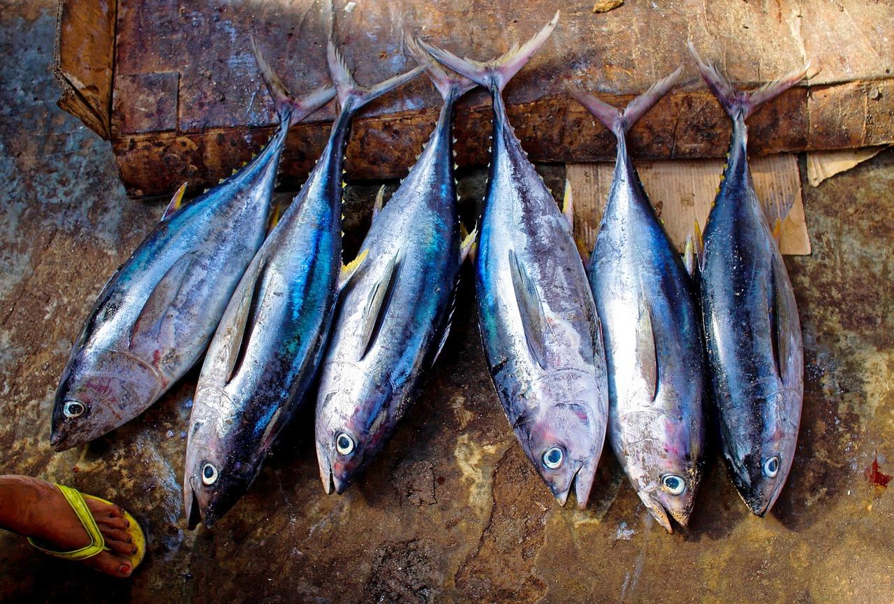 tuna bond affair